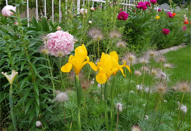 explozie de culoare gard metal flori
