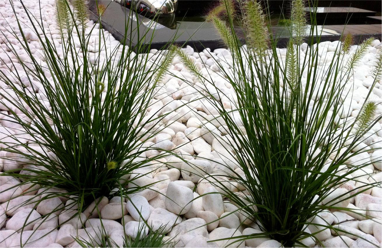 gradina japoneza plante pietre albe