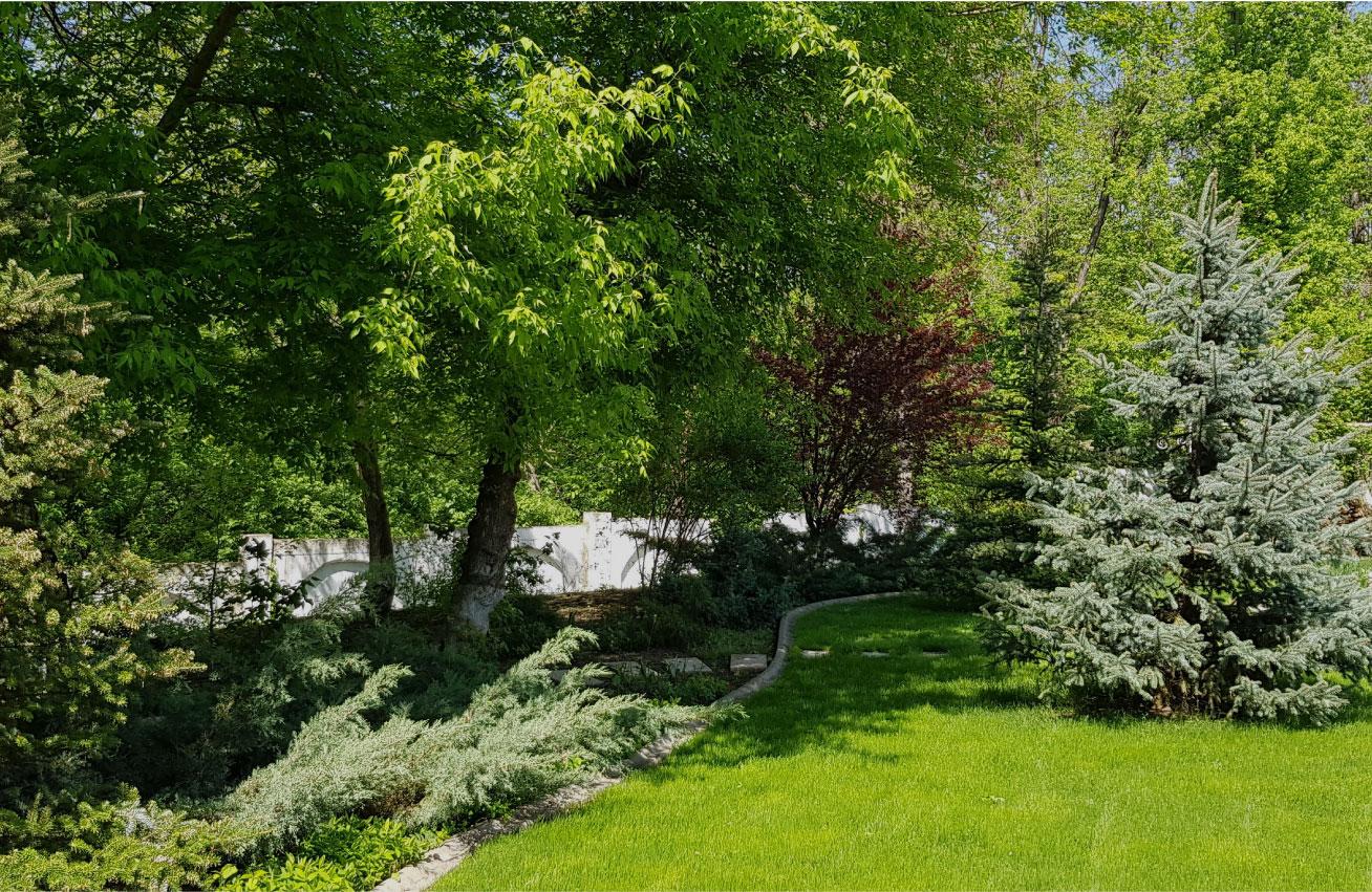 plimbare romantica gradina conifere si foioase