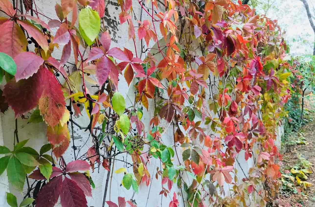 gard decorativ din plante